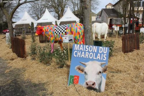 Les Charolaises de la Maison du Charolais ont été déplacées pour l'occasion